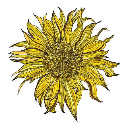 Hand drawn blooming sunflower