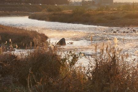 두꺼운 강 풍경 스톡 콘텐츠
