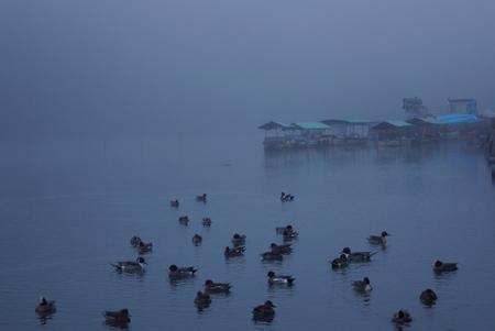 waterfowl: Waterfowl landscape