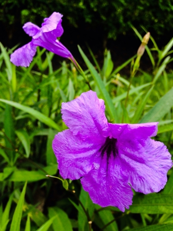 isolated: Purple flowers in the garden  Stock Photo