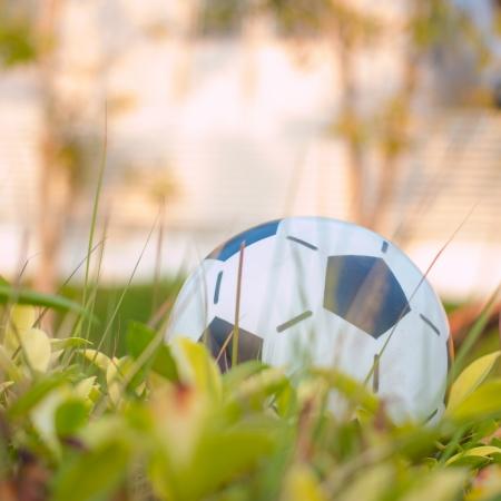 Ball in the park 版權商用圖片