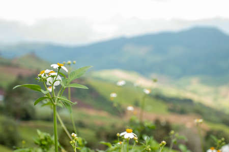 Small white flowers on the mountains in the daytime. Stock Photo