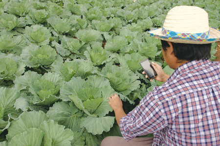 Smart farmer is using a mobile phone. Analyze plants in the field, Smart farming and digital agriculture concept
