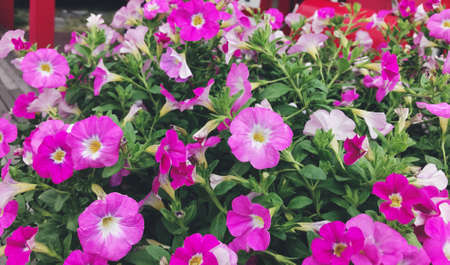 Many purple flowers are blooming beautifully in the garden.