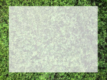 Top view with small green leaves, natural background for text input.