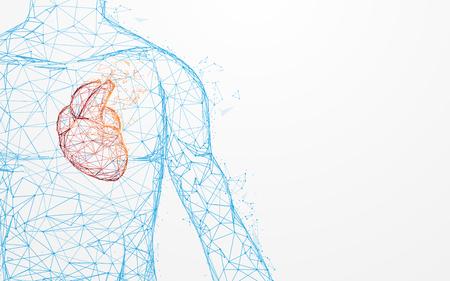 La anatomía del corazón humano forma líneas y triángulos, red de conexión de puntos sobre fondo azul. Vector de ilustración