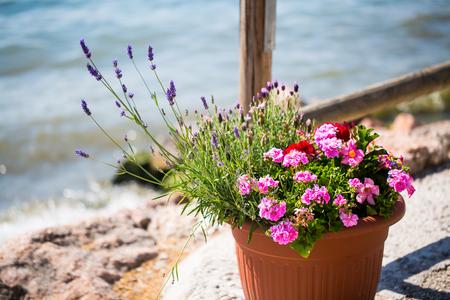 Flowerpot on the shore of Lake Garda