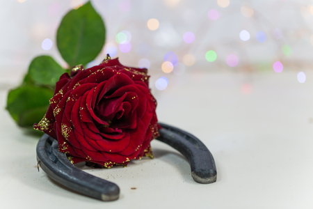 Horseshoe with red rose, good luck charm, birthday Foto de archivo - 91528690