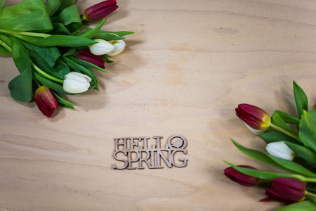 tulips , with text, hello spring, wooden background