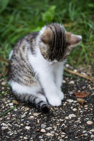 Baby cat is looking down, sad look Stock Photo