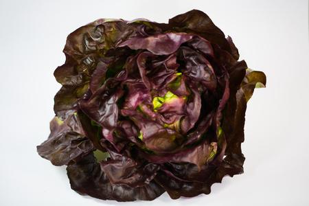 Burgundy salad on white background
