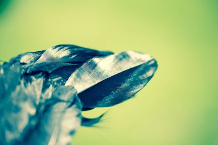 black feather from an angels wing,