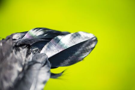 feather from an wing , angelwings 版權商用圖片 - 131099859