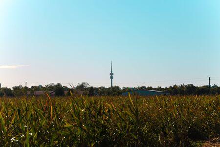TV tower seen from Feldmoching, corn field 版權商用圖片