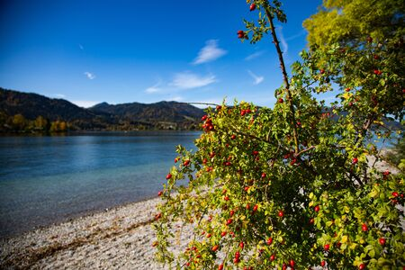 Tegernsee on a sunny autumn day, blue sky, mountains in the background 版權商用圖片 - 131925459