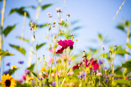 Flower meadow, summer, bee pasture, summer meadow background 版權商用圖片