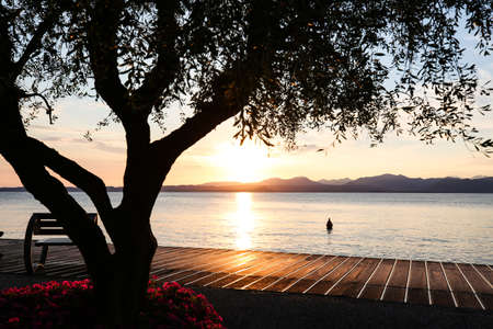 Sunset with olive trees on the Bardolino lake promenade