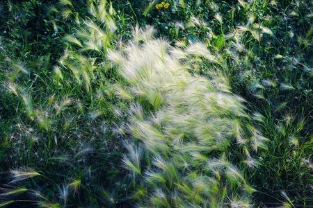 summer grasses Stockfoto
