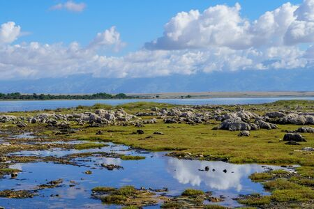 Beautiful landscape view of the blue sky, white clouds and green-yellow grass reflected by the sea water Stock fotó - 150294059