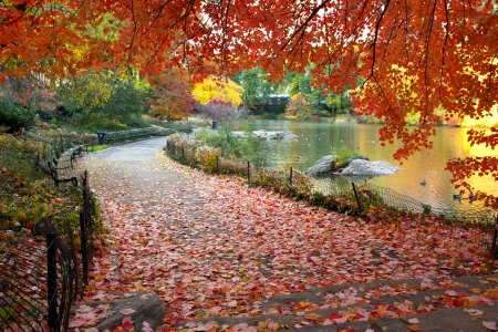 autumn city: Autumn leaves in Central Park New York