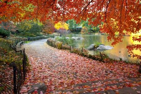 Herbstblätter im New Yorker Central Park Standard-Bild - 15221713