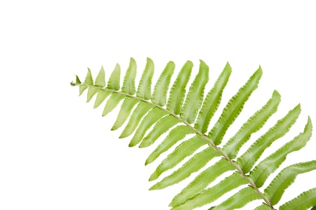 illus: Fern leaves Stock Photo