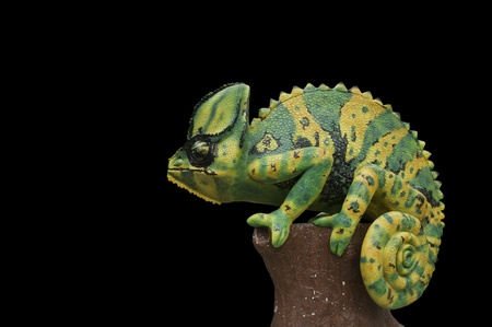 extracted:  Chameleon statue