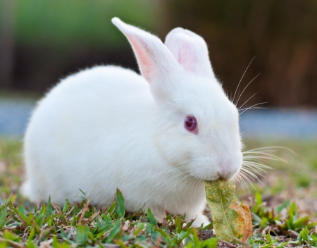 White rabbit in the farm photo