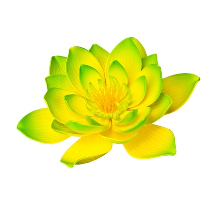 lotus blossom: Yellow lotus