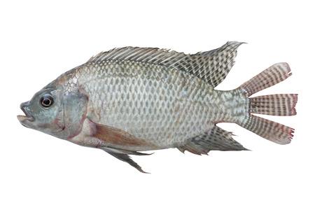 mango fish: Mango fish isolate on with background