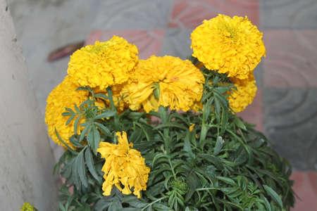 Beautiful Natural Flower in Flower Garden