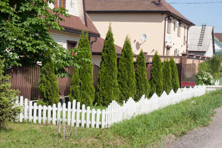 planted: Thuja is planted in a row and fenced