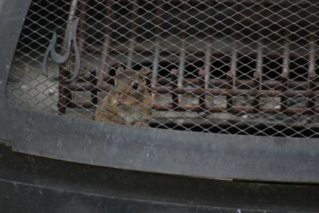 missouri wildlife: Chipmunk in backyard Stock Photo