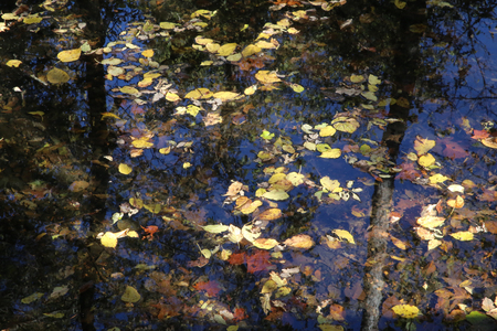 trinchante: Leaves on water at George Washington Carver in Diamond, Missouri Foto de archivo