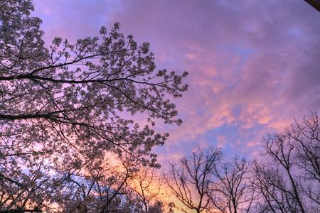 cloud formations: Sunset skies over Joplin, Missouri