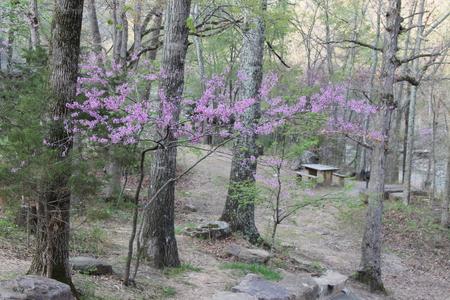 den: Flowering trees at Devils Den State Park in Arkansas