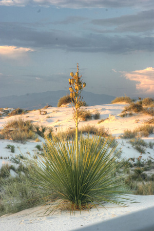alamogordo: White Sands National Monument in New Mexico