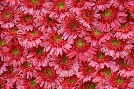 Red and pink flowers. Stock Photo - 9446004