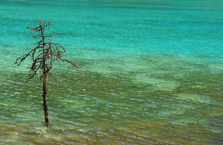 Turquoise water with a lonely pine. Stock Photo - 9446000