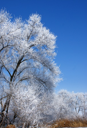 The tree in the frost on the background of blue sky.