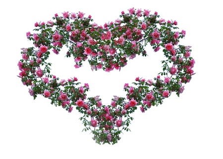 The heart of the green branches with lots of roses. Stock Photo
