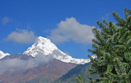 Snowy peak on the background of blue sky and fluffy pine.