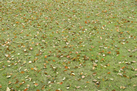 Yellow leaves lying on the green grass  Stock Photo
