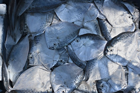 Fresh flat fish in a drawer for sale  Stock Photo