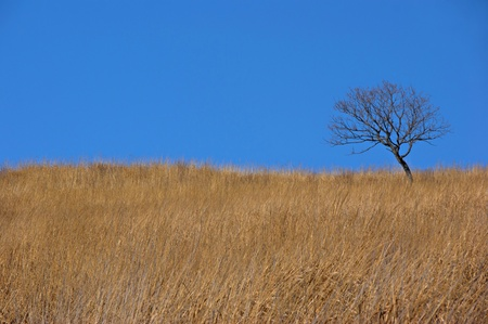 Lonely tree on the yellow grass in the background of the sky  Stock Photo