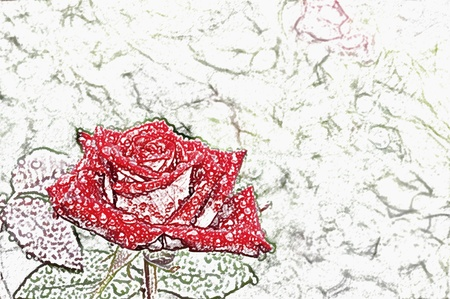 Flower rose with dew-drops