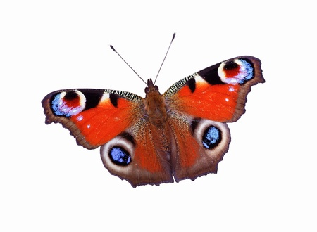 Isolated bright red butterfly