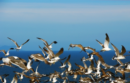 Soaring gulls on the background of the sea.
