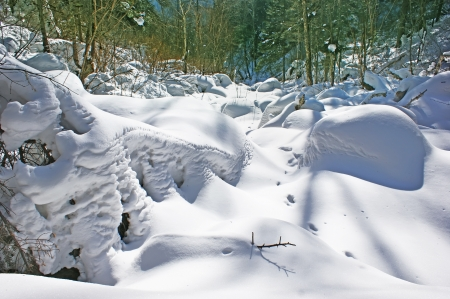 The forest is covered with fresh white snow.