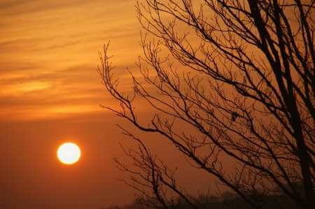 Bright sunset with silhouettes of trees.